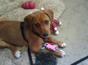 Molly_playing