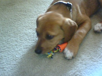 Molly_with_toy